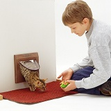 Training Bengal cat to come through the cat flap