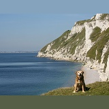 Dog with coastal chalk cliff view