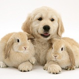 Rabbits and Retriever pup