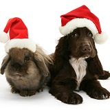 Cocker Spaniel pup and rabbit with Santa hats on