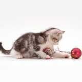 Silver Tabby-and-white kitten playing with tinsel
