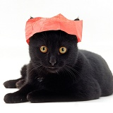 Black cat in a Christmas cracker hat