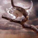 Kitten up a tree with cloudy sky