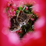 Tabby kitten among roses
