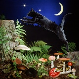 Black cat leaping at night