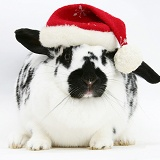 Black-and-white spotted rabbit wearing a Santa hat