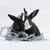 Black-and-white baby rabbits with tinsel