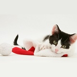 Black-and-white kitten playing with a Santa hat