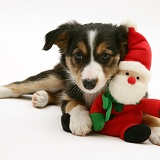 Border Collie puppy with a Santa toy