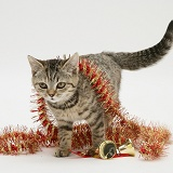 Tabby kitten with Christmas tinsel and bells