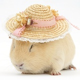 Yellow guinea pig wearing a straw hat