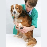 Vet nurse clipping a dog's claws
