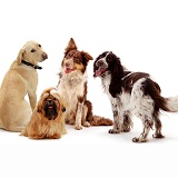 Mixed dog breeds