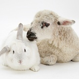 Lamb and white rabbit