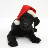 Black Labrador-cross pup with Santa hat on