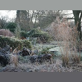 Gunnera and grasses in winter