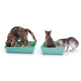 Cats in litter trays