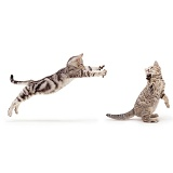 Silver tabby cats play-fighting
