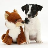 Jack Russell Terrier pup with toy fox