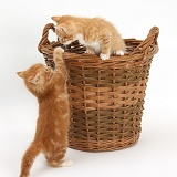 Ginger kittens playing in a wicker basket