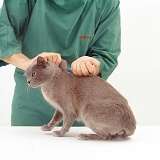 Giving booster vaccination to a cat