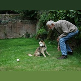 Rolling a ball for a dog