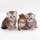 Kittens and Grey Squirrel