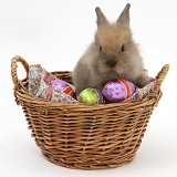 Baby rabbit in a basket with Easter eggs