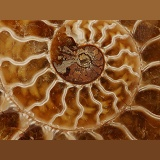 Pattern of sectioned ammonite