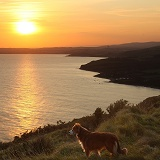 Border Collie on the coast at sunset