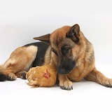 Alsatian and chicken