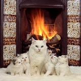 Family of white cats by the fire