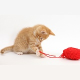 Ginger kitten playing with red wool