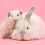 White Guinea pig and white rabbit on pink background