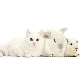 White kitten, white rabbit and white Guinea pig