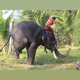 Mahout, getting his elephant to perform a trick