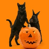 Black cat and black rabbit with Halloween Pumpkin