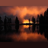 Forest fire at night with silhouette trees
