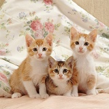 Three kittens on a bed