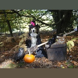 Halloween collie