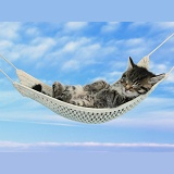 Cute tabby kitten sleeping in a hammock