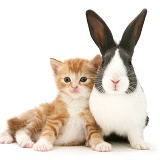 Ginger kitten and Dutch rabbit