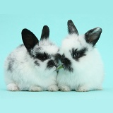 Cute black-and-white baby bunnies on blue background