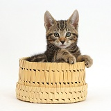 Tabby kitten in a basket