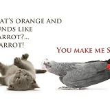 Kitten and carrot sick as a parrot joke