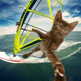 Windsurfing cat selfie