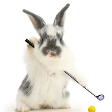 Baby bunny playing golf