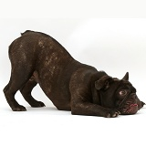 French Bulldog in play-bow