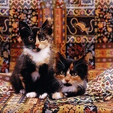 Tortoiseshell kittens lying on a carpet