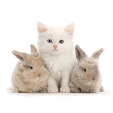 White kitten and beige bunnies